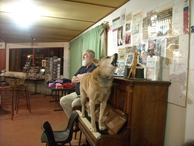 Dinky The Singing Dingo On Dr Harry